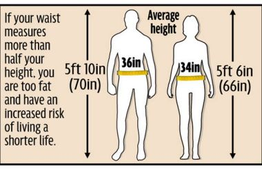 Body Graphic, Height to Waist Ratio