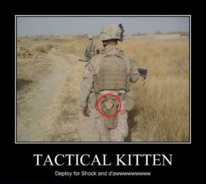 Surprise, Tactical Kitten